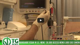 veganok – 2019-07-10T184343.038